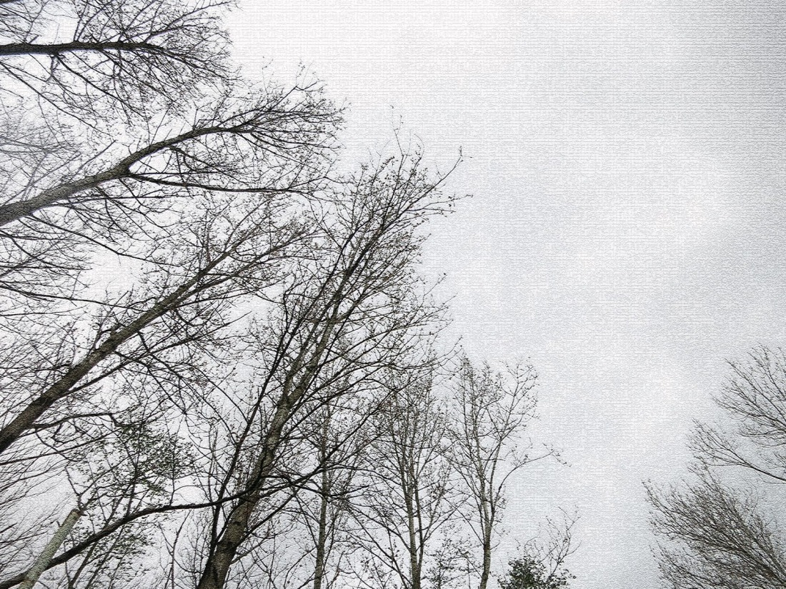 bare trees with a rainy sky behind them