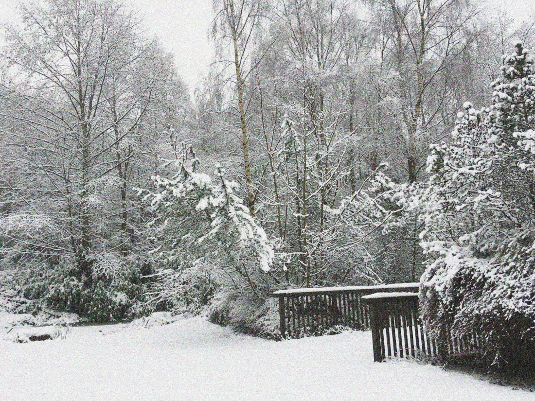 snow scene taken in a park. Snow covered ground, trees and a bridge.
